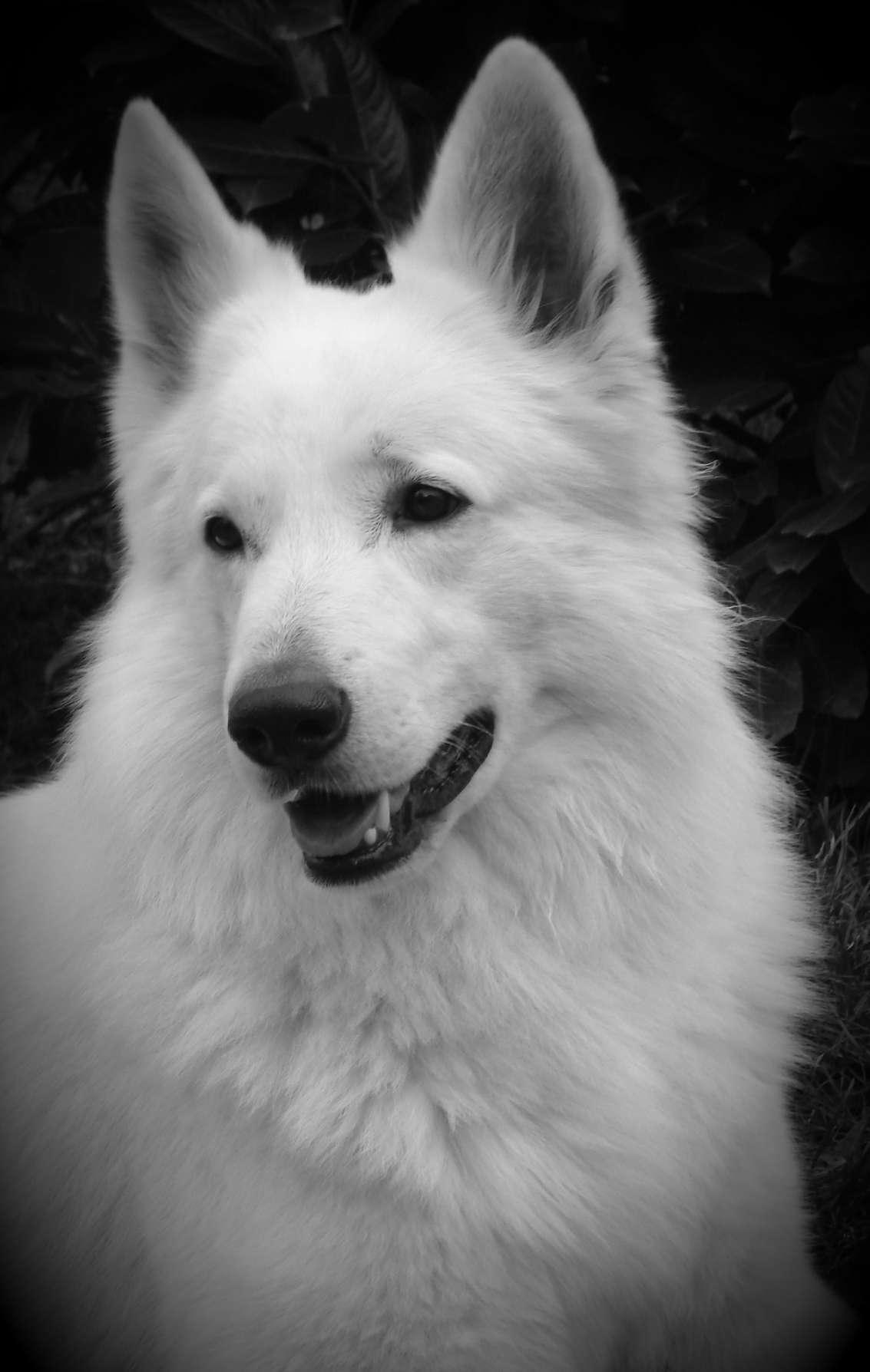 Le chien 2007 - 5 2